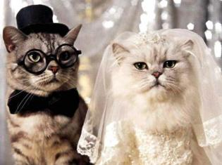 Cat-Couple-Funny-Wedding